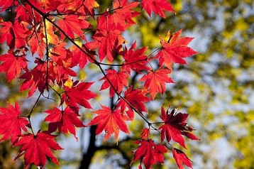 autumn-leaves-2789234__3401