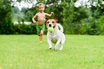dog-ball-running-child-playing-260nw-5961375441